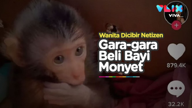 Wanita Ini Dihujat Gara-gara Beli Bayi Monyet