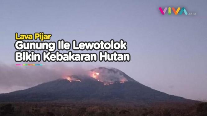 Erupsi Gunung Ile Lewotolok Menyebabkan Kebakaran Hutan